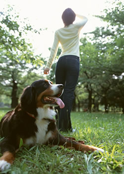家族の犬を自宅で手元供養